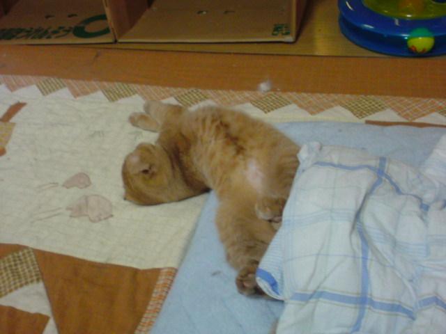 まったり猫ルーム