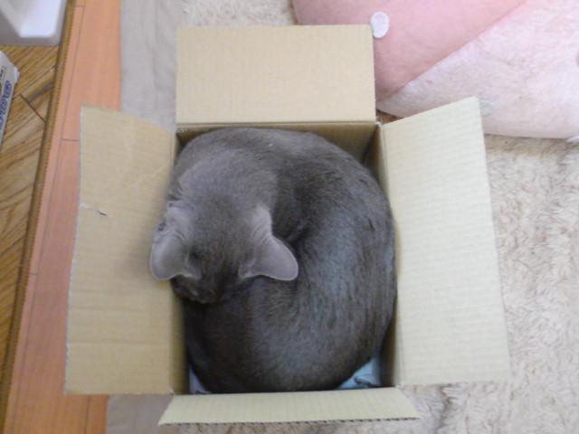 箱でぽかぽか
