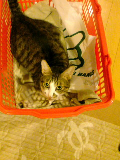 隠居部屋の住猫
